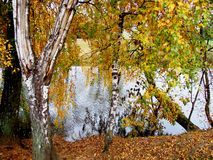 秋天五颜六色的公园结构树 免版税库存照片