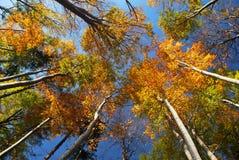 秋天五颜六色的冠结构树 免版税库存图片