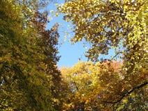 秋天五颜六色的叶子公园 蓝色多云秋天域横向偏僻的天空结构树黄色 库存图片