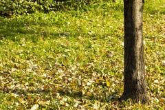 秋天五颜六色的叶子公园 库存图片