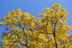 秋天五颜六色的叶子公园 库存照片