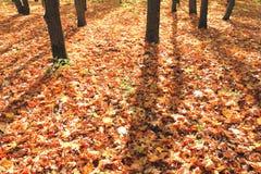 秋天五颜六色的叶子公园 图库摄影