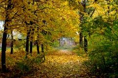 秋天五颜六色的叶子公园 免版税图库摄影