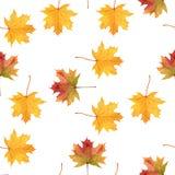 秋天五颜六色的叶子在白色,无缝的样式,水彩手拉的元素,纺织品的艺术品打印 库存图片