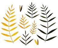 秋天五颜六色的叶子收藏 水彩元素 皇族释放例证