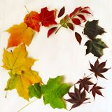 秋天五颜六色的叶子框架 库存图片