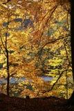 秋天五颜六色的叶子第三阶段个结构树 免版税库存照片