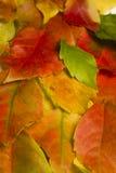 秋天五颜六色的叶子纹理 图库摄影