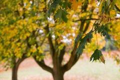 秋天五颜六色的叶子纹理 库存照片