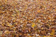 秋天五颜六色的叶子纹理 免版税库存照片