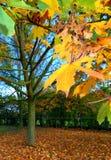 秋天五颜六色的叶子结构树 免版税库存照片