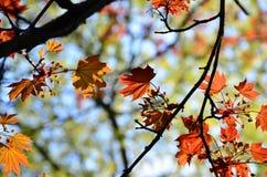 秋天五颜六色的叶子背景树 库存图片
