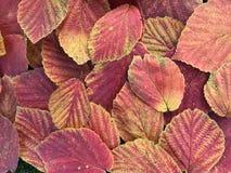 秋天五颜六色的叶子许多 免版税库存照片