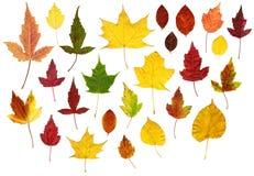 秋天五颜六色的叶子许多 图库摄影