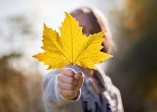 秋天五颜六色的叶子,室外 库存图片
