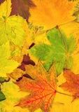 秋天五颜六色的叶子 垂直的卡片 库存照片