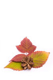秋天五颜六色的叶子 梯度 孤立 库存照片