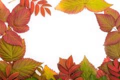 秋天五颜六色的叶子 边界 孤立 库存照片
