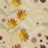 秋天五颜六色的叶子 库存照片