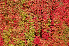 秋天五颜六色的叶子 图库摄影