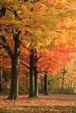 秋天五颜六色的场面 库存照片