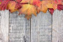 秋天五颜六色的干燥槭树在灰色木桌离开 免版税图库摄影