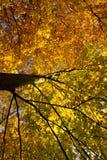 秋天五颜六色的德国结构树 库存照片