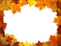 秋天五颜六色的框架叶子 库存图片