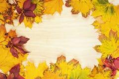 秋天五颜六色的框架叶子 免版税库存图片