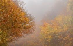 秋天五颜六色的森林在有雾的早晨 库存照片