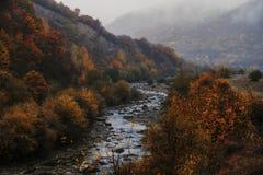 秋天五颜六色的森林横向 库存照片