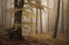 秋天五颜六色的森林生叶结构树 库存图片