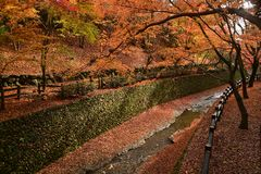 秋天五颜六色的森林离开风景 美好的红槭叶子秋天在庭院里 图库摄影