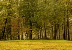 秋天五颜六色的森林离开风景 免版税库存图片