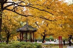 秋天五颜六色的森林离开风景 免版税图库摄影