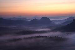 秋天五颜六色的森林离开风景 库存照片