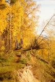 秋天五颜六色的森林离开风景 图库摄影