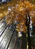 秋天五颜六色的森林 图库摄影