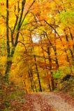 秋天五颜六色的森林 库存照片
