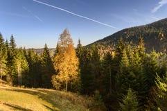 秋天五颜六色的横向山日出 库存照片