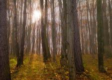 秋天五颜六色的横向 背景蓝色云彩调遣草绿色本质天空空白小束 免版税库存照片