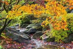 秋天五颜六色的横向 库存照片