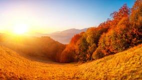秋天五颜六色的横向 股票视频