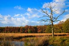 秋天五颜六色的死者叶子结构树结构&# 免版税库存图片