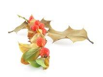 秋天五颜六色的组叶子 免版税图库摄影