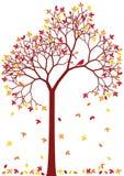 秋天五颜六色的结构树 库存图片