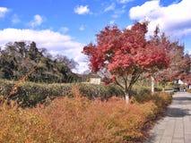 秋天五颜六色的结构树 图库摄影