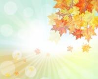秋天五颜六色的设计叶子花圈 免版税库存图片