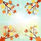 秋天五颜六色的设计叶子花圈 免版税库存照片