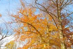 秋天五颜六色的调色板 图库摄影